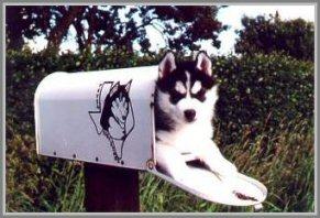dancer mailbox kl